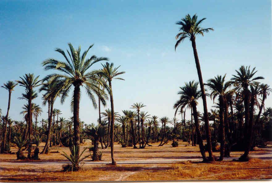 marrakech_palmeraie