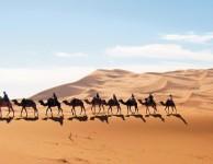 maroc-balade-dromadaire